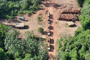 Operação da PF faz a maior apreensão de madeira da história
