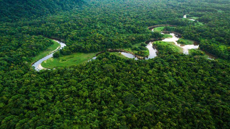 Desmatamento na Amazônia tem queda de 70% em janeiro, informa governo