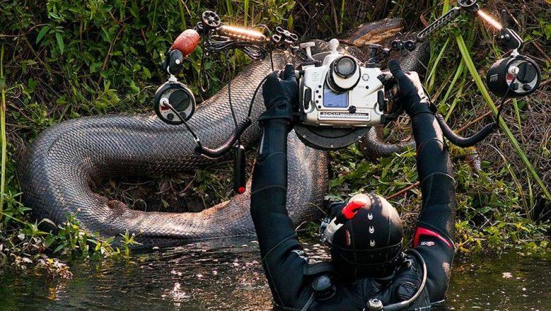 Sucuris gigantes são flagradas em expedições de fotógrafos subaquáticos por rios de MS; veja imagens